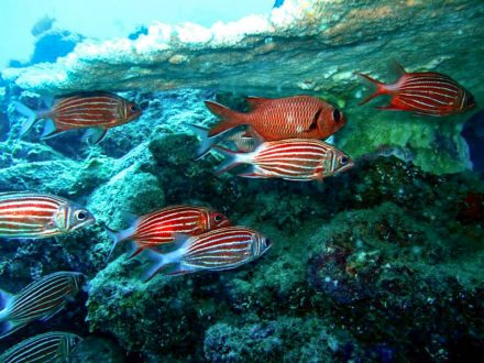 school of red fish blue bay