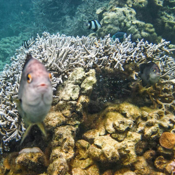 snorkeling with fishes in blue bay marine park