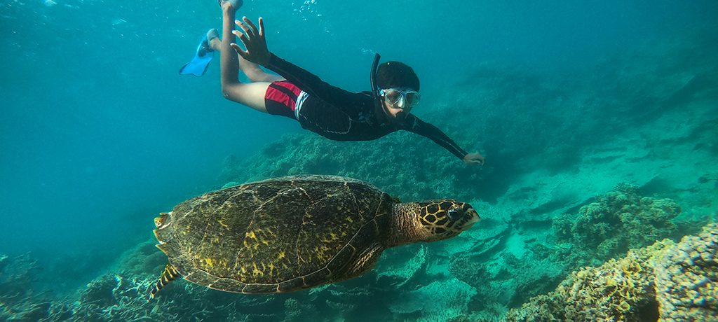 Totof Tours Mauritius Snorkelling with a Turtle Blue Bay Marine Park