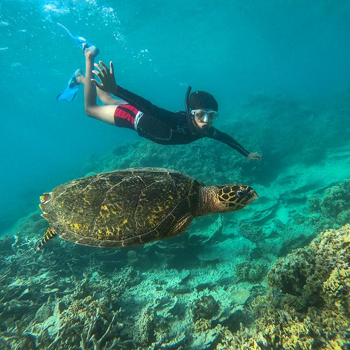 Schnorcheln mit einer Schildkröte in Blue Bay mit Totof Tours Mauritius